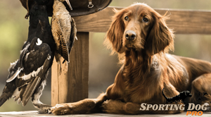 A Bit About the AKC Sporting Dog Group