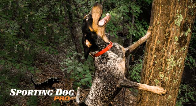 About Coon Hunting Dogs