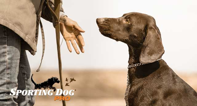 Developing A Standard In Your Dog Training