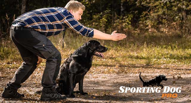 Do You Have What It Takes To Train Your Dog?