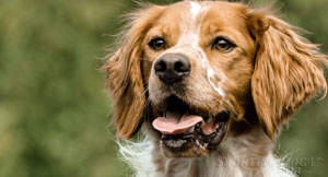 Recall: Teaching Your Dog to Come When Called
