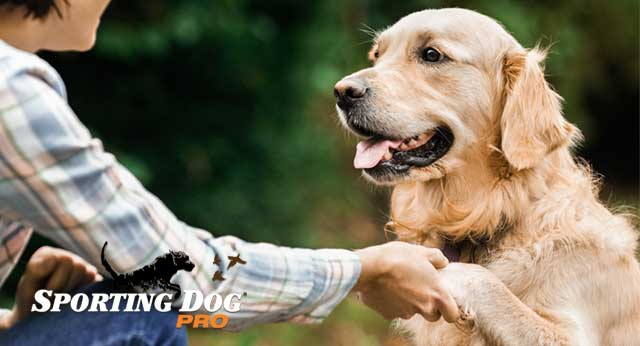 Eight Training Tips For Giving Your Dog Any Command
