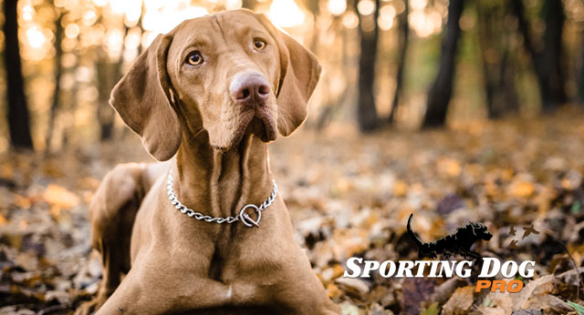 Four Tips for Training Your Dog for Life