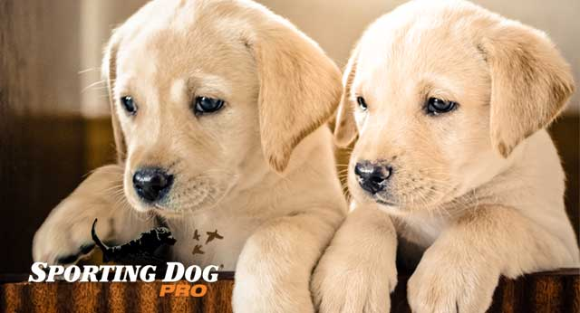 Healthy Puppy Development - What to Expect