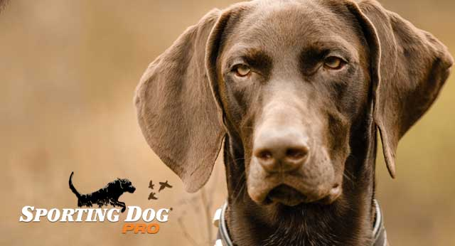 How Does Your Hunting Dog Learn?