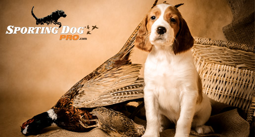 Most Popular Hunting Dog Names Of All Time