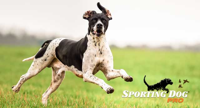 Keeping Your Dog Happy and Healthy