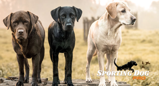 8 Myths and Misconceptions about Retrievers
