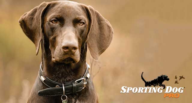 Successful Communication With Your Gundog