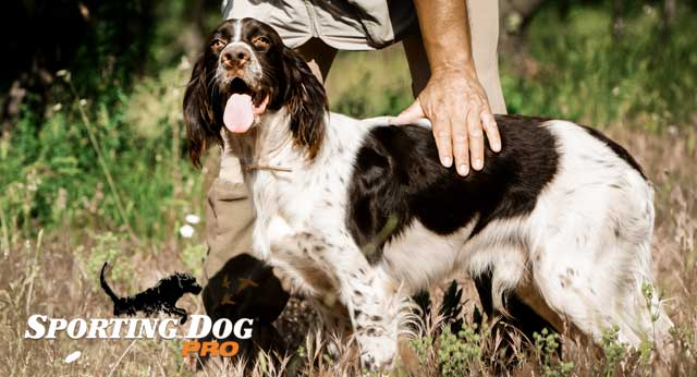 10 Steps To Take Before You Hire A Professional Dog Trainer