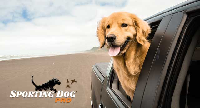 Tips for Traveling In The Car With Your Dog