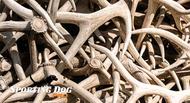 What Is Shed Hunting All About?