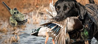 waterfowl training tools for you furry friend